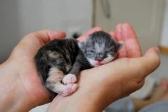 Franzi neugeboren