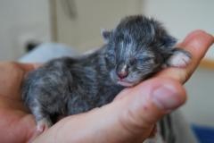 Feline neugeboren