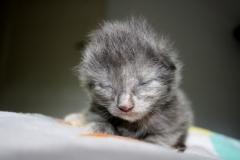 Feline 12 Tage