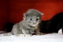 Feline 2,5 Wochen
